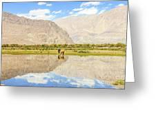 Horse On Lake Greeting Card