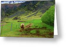 Horse On The South Iceland Coast Greeting Card