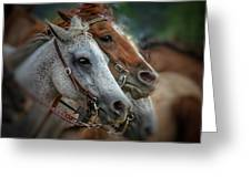 Horse Pair Greeting Card