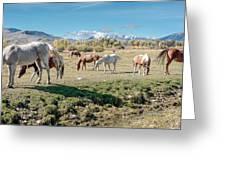 Horse Pasture Greeting Card