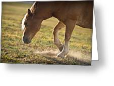 Horse Pawing In Pasture Greeting Card