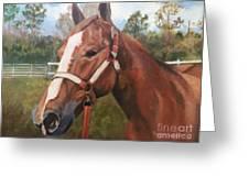 Red Dun Horse - Reds Done Dancin By Marilyn Nolan-johnson Greeting Card