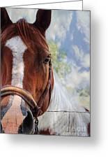Horse Portrait Closeup Greeting Card