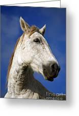 Horse Portrait Greeting Card by Gaspar Avila