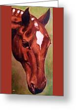 Horse Portrait Horse Head Red Close Up Greeting Card