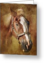Horse Portrait II Greeting Card