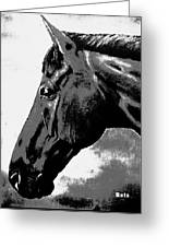 horse portrait PRINCETON black and white Greeting Card