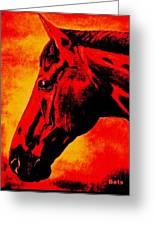 horse portrait PRINCETON sunset Greeting Card