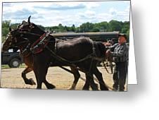 Horse Pull B Greeting Card