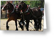 Horse Pull D Greeting Card