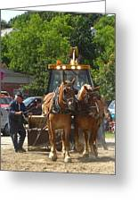 Horse Pull In New Brunswick Canada Greeting Card