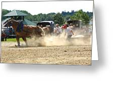 Horse Pull In St Stephen Nb Greeting Card