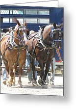 Horse Pull J Greeting Card