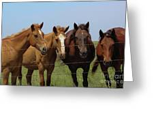 Horse Quartet Greeting Card