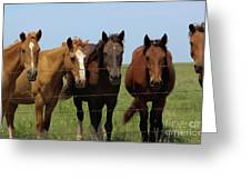 Horse Quintet Greeting Card