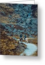 Horse Riders At Mahon Falls Greeting Card