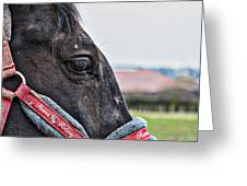 Horse Riding Horse Greeting Card