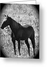 Horse Scope Greeting Card
