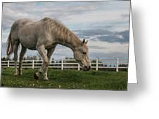 Horses #1 Greeting Card