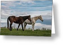 Horses #2 Greeting Card