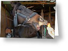 Horse Snack  Greeting Card