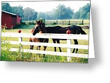 Horse Stable Greeting Card