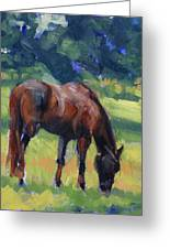 Horse Study No.40 Greeting Card