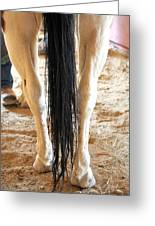 Horse Tail. Greeting Card