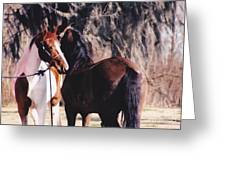 Horse Talk Greeting Card