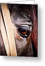 Horse Tears Greeting Card