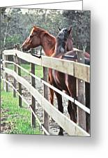 Horse Whisperers Greeting Card