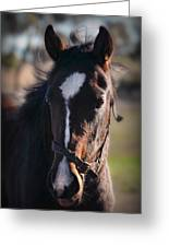 Horse Whispering Greeting Card
