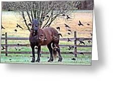 Horsebirds Greeting Card