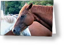 Horses 1 Greeting Card