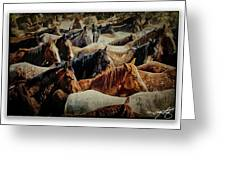 Horses 29 Greeting Card