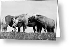 Horses 3 Greeting Card