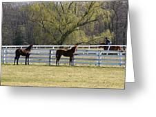 Horses 363 Greeting Card