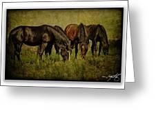 Horses 37 Greeting Card