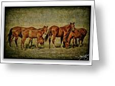 Horses 38 Greeting Card
