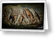 Horses 39 Greeting Card