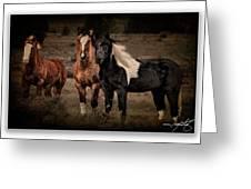 Horses 40 Greeting Card