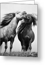 Horses 5 Greeting Card
