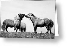 Horses 7 Greeting Card