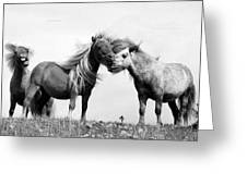 Horses 8 Greeting Card