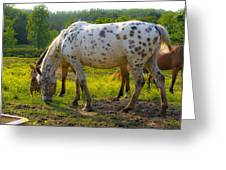 Horses And Buttercups Greeting Card