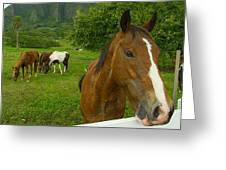 Horses At Kualoa Ranch Greeting Card