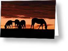 Horses At Sunset Greeting Card
