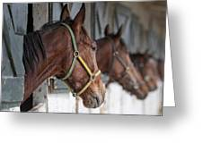 Horses For Sale Greeting Card