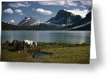 Horses Graze In A Lakeside Meadow Greeting Card