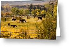Horses Grazing In The Late Afternoon Greeting Card
